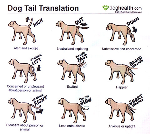 Wagging_tail